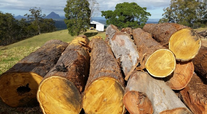 logs ready for mobile milling sunshine coast